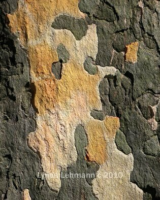 Color Photograph by Lynda Lehmann titled: Bark Abstract 100, 2010