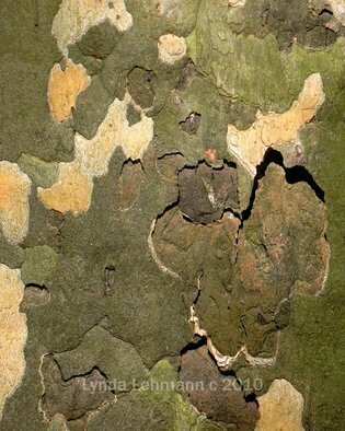 Color Photograph by Lynda Lehmann titled: Bark Abstract 101, 2010