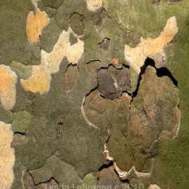 Bark Abstract 101 By Lynda Lehmann