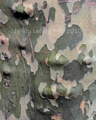 Color Photograph by Lynda Lehmann titled: Bark Abstract 102, 2010