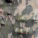 Bark Abstract 102 By Lynda Lehmann