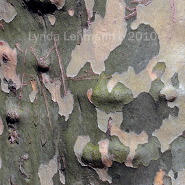 Lynda Lehmann: 'Bark Abstract 102', 2010 Color Photograph, Beauty. Artist Description:   Abstracted realism: tree bark as a composite of abstractions, nature's paintbrush at work. Keywords: bark, tree, nature, beauty, closeup, macro, texture, tactile, abstraction, rough, sensuous, botanical,