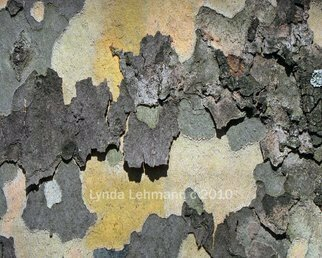 Color Photograph by Lynda Lehmann titled: Bark Abstract 89, 2010