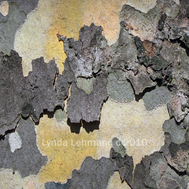 Lynda Lehmann: 'Bark Abstract 89', 2010 Color Photograph, Beauty. Artist Description:   Abstracted realism: tree bark as a composite of abstractions, nature's paintbrush at work. Keywords: bark, tree, nature, beauty, closeup, macro, texture, tactile, abstraction, rough, sensuous, botanical,