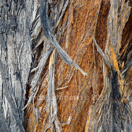 Lynda Lehmann Artwork Bark of Palm, 2011 Color Photograph, Abstract