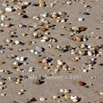 Beach Jewels By Lynda Lehmann