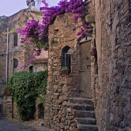 Lynda Lehmann: 'Bussana Vecchia Street', 2005 Other Photography, World Culture. Artist Description: Bouganvillea trails over the edge of a building in the ancient village of Bussana Vecchia, in northern Italy. The village was toppled by an earthquake and became a ghost- town in 1887, and is now used as an international artist' s colony.  Image c Lynda Lehmann. ...