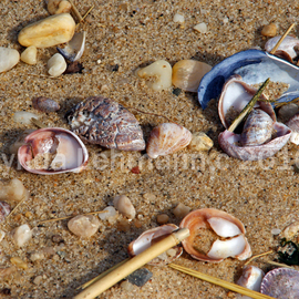 Lynda Lehmann: 'Continuum', 2010 Color Photograph, Beauty. Artist Description:  Colorful seashells scattered on the beach.Keywords: seashells, nature, beach, beauty, scenic, sand, texture, shore, marine, coastal,   ...