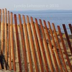 Curve of the Sand Fence By Lynda Lehmann