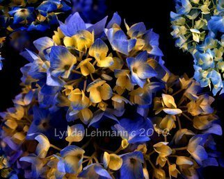Color Photograph by Lynda Lehmann titled: Digital Hydrangea, created in 2010