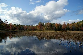 Lynda Lehmann: 'Enigma of Beauty', 2008 Color Photograph, Ecological.  A panoramic view of the brilliant foliage around a Maine lake in early autumn, with fluffy fair- weather clouds and aquatic plants reflected in the water. When I see a scene like this, I' m astounded at the beauty of our Earth, especially in those places we could say are...