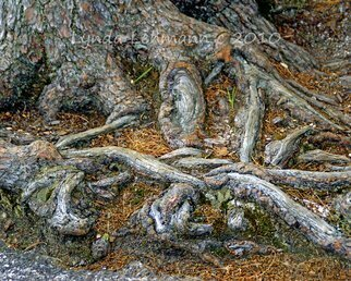Color Photograph by Lynda Lehmann titled: Foot of the Tree, 2010