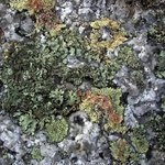 Garden  Of Lichen And Granite, Lynda Lehmann