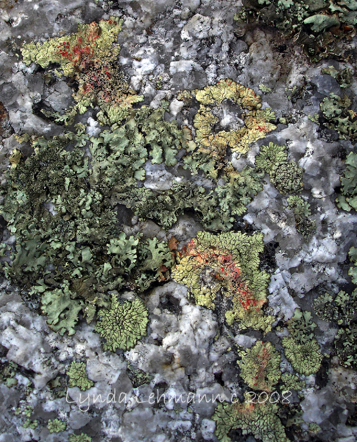 Lynda Lehmann  'Garden  Of Lichen And Granite', created in 2008, Original Photography Mixed Media.