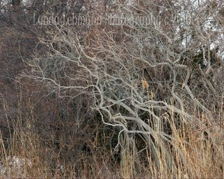 Color Photograph by Lynda Lehmann titled: Gesturing Copse, created in 2010