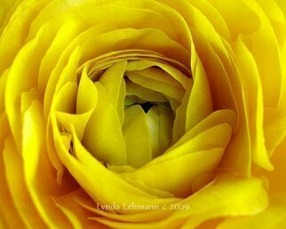 Color Photograph by Lynda Lehmann titled: Golden Beauty, 2009