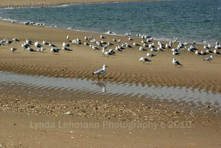 Color Photograph by Lynda Lehmann titled: Gull Walk, created in 2010