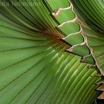 Inconceivable Unfolding Of A Palm, Lynda Lehmann