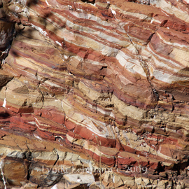Layered Rock in Tonto Forest