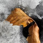 Leaf Duo On Ice, Lynda Lehmann