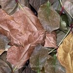 Leaf Pattern By Lynda Lehmann