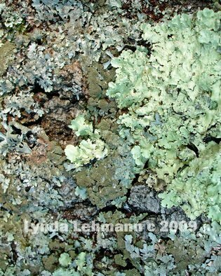 Color Photograph by Lynda Lehmann titled: Lichen Painting, created in 2009