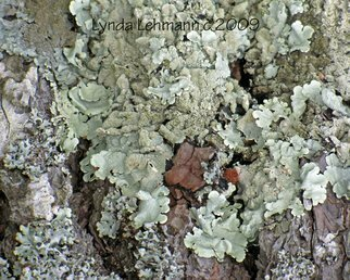Color Photograph by Lynda Lehmann titled: Lichen Puzzle, created in 2009