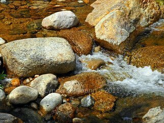Lynda Lehmann Artwork Life of the River Bed, 2011 Color Photograph, Scenic