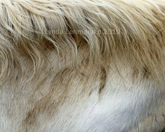 Color Photograph by Lynda Lehmann titled: Mane, 2010