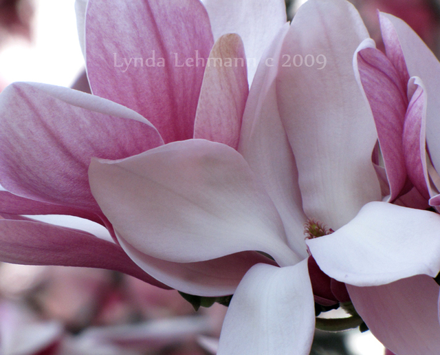 Lynda Lehmann  'New Blooms', created in 2009, Original Photography Mixed Media.