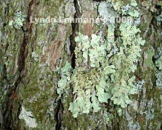 Color Photograph by Lynda Lehmann titled: No Lichen is an Island, created in 2009
