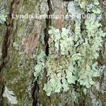 No Lichen is an Island By Lynda Lehmann