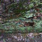 Oak, Birch, Bark, And Lichen, Lynda Lehmann