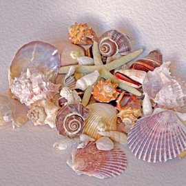 Lynda Lehmann: 'Peaceful Coexistence', 2015 Digital Photograph, Beauty. Artist Description:   These seashells offers a colorful variety of forms and gestures, and only begin to hint at the richness and mysteries of nature.  Keywords:  shells, seashells, marine life, creatures, denizens, ocean dwellers, nature, beauty, patterns, gesture, color, ridges, conch, circular, beautiful, collection, graceful, elegant, mysterious, rich, furrows, lines, still ...