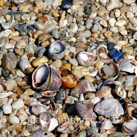 Lynda Lehmann: 'Peculiar Mix', 2010 Color Photograph, Beauty. Artist Description:  Tiny, colorful seashells at the seashore. Keywords: shells, sand, marine, beach, shore, coastal, seashells, nature, closeup, macro, meditative, beauty ...