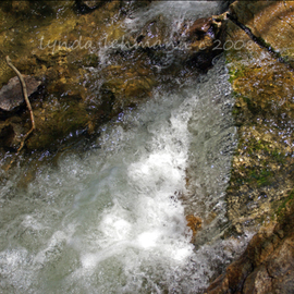 Lynda Lehmann: 'Plunge Through Light and Shadow', 2008 Color Photograph, Landscape. Artist Description:  A rivulet plunges out of the shadow of the forest and into the sun- dappled water of a stream, hissing and foaming as it catapults down the rocks. Image c Lynda Lehmann. Print 8 x 10 matted to 11 x 14.  ...