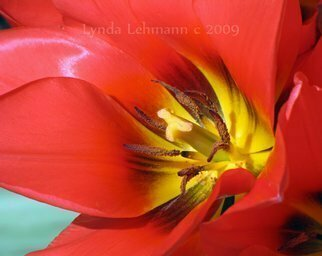 Color Photograph by Lynda Lehmann titled: Red Glory, created in 2009