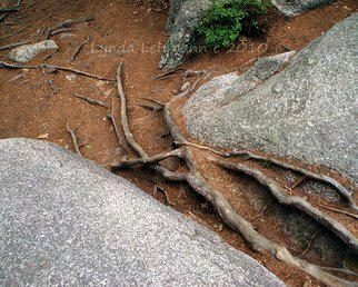 Color Photograph by Lynda Lehmann titled: Roots, 2010