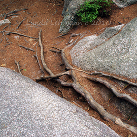 Lynda Lehmann: 'Roots', 2010 Color Photograph, Landscape. Artist Description:  Tree roots feeling their way along the forest path, are an organic contrast to the boulders surrounding them.Please contact me if you are interested in sizes other than the 8 x 10 print matted to 11 x 14 inches.Keywords: beauty, background, trees, roots, beautiful, nature, scenic, ...