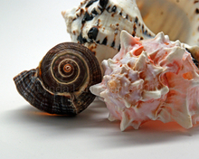 - artwork Shell_Grouping-1284430369.jpg - 2010, Photography Color, Still Life