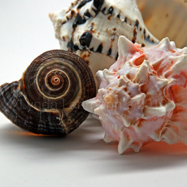 Shell Grouping By Lynda Lehmann