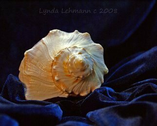 Color Photograph by Lynda Lehmann titled: Shell on Blue Velour, created in 2008