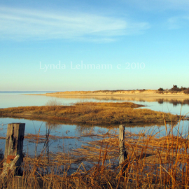 Shoreline Magic  By Lynda Lehmann