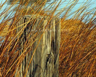 Color Photograph by Lynda Lehmann titled: Splinters and Tall Grasses, 2010
