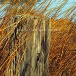 Splinters and Tall Grasses By Lynda Lehmann