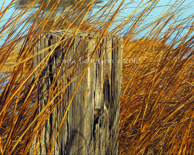 Lynda Lehmann  'Splinters And Tall Grasses', created in 2010, Original Photography Mixed Media.