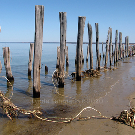 Lynda Lehmann: 'Stranded', 2010 Color Photograph, Beauty. Artist Description:  Wind and sea- worn wood posts from another era, line the beach at the edge of Long Island Sound, making a surreal landscape that can be a metaphor or symbol for many things. Keywords: wood, wharf, ruins, posts, piles, vintage, landscape, antique, industrial, strange, evocative, beach, water, worn, ...