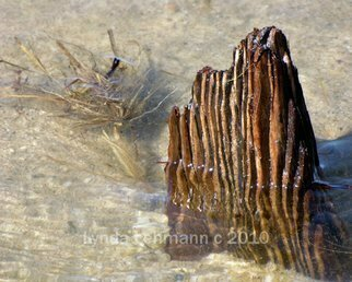 Color Photograph by Lynda Lehmann titled: Stump, 2010