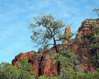 Lynda Lehmann Artwork Tall Trees and Rocky Spires, 2011 Color Photograph, Landscape
