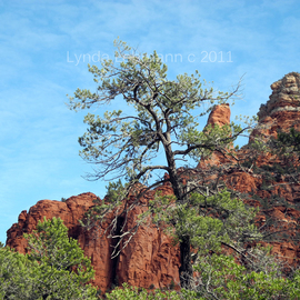 Tall Trees and Rocky Spires  By Lynda Lehmann